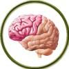 Для мозговой активности (0)
