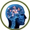 Нервная система (1)